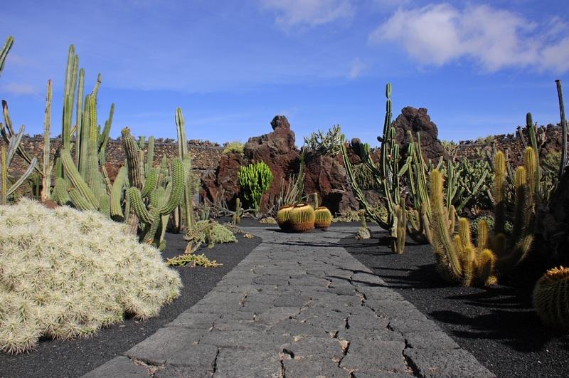 cactus 4