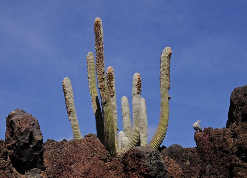 cactus 12