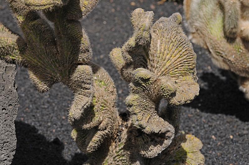cactus 30
