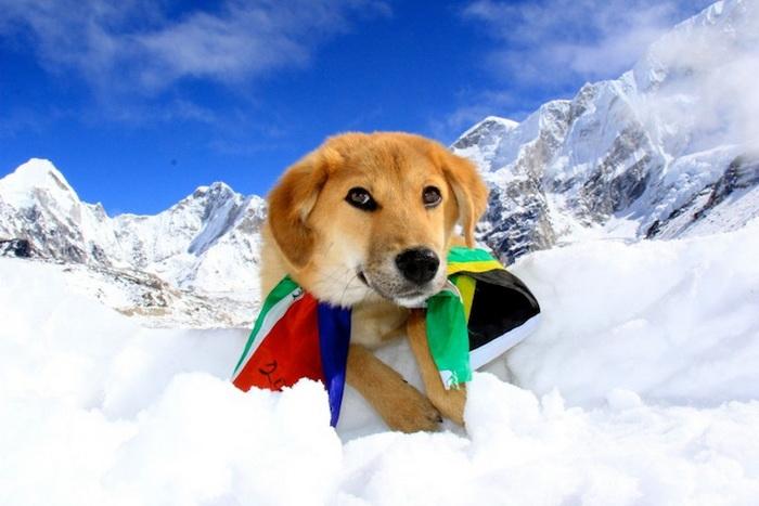 dog-mount-everest-2