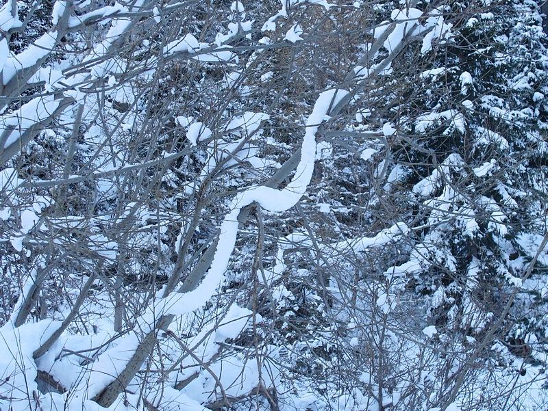 Vallee Berar Chamoni 14