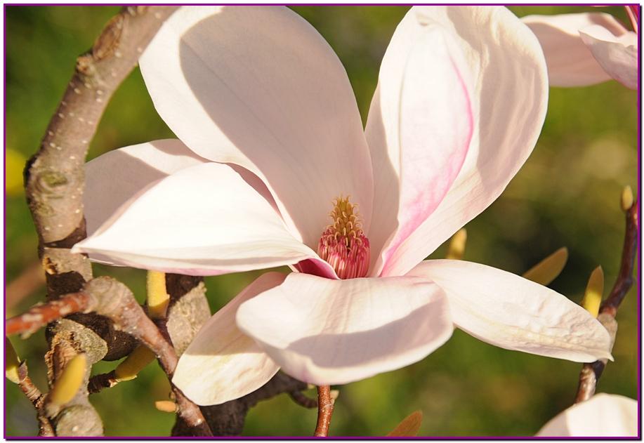 color rose 2