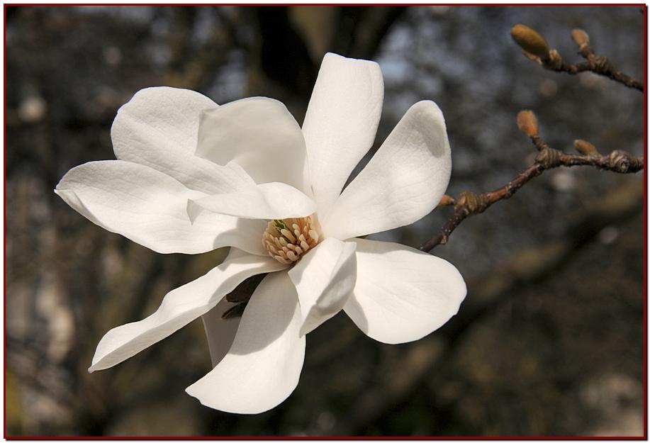 color blanc 2