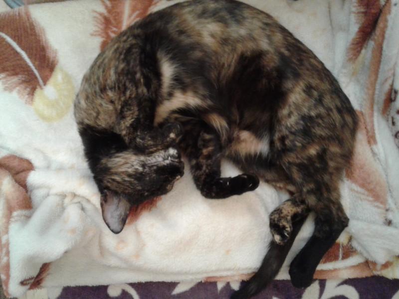 кошка на реактивной тяге