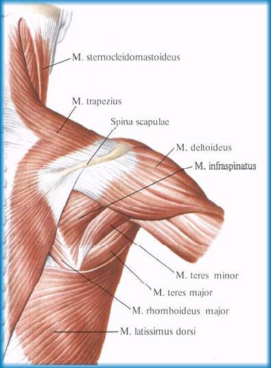 Частичный разрыв надостной мышцы плечевого сустава мкб 10 разрыв мениска коленного сустава операция стоимость