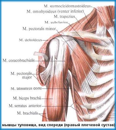 Тендинит ротаторов вращающей манжеты плечевого сустава компенсация эндопротезирования тазобедренного сустава