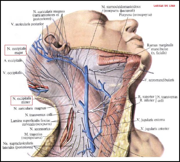 Невралгия затылочного нерва мкб 10