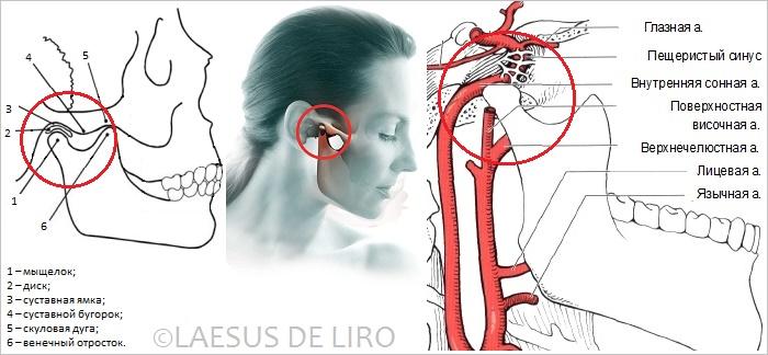 Внутренней дисфункции височно-нижнечелюстного сустава средство для суставов геленг форте