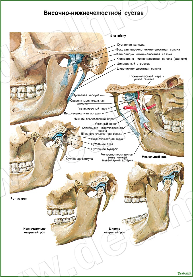 Внутренней дисфункции височно-нижнечелюстного сустава лечебная гимнастика перелома лучезапястного сустава