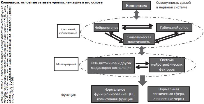 коннектом_схема