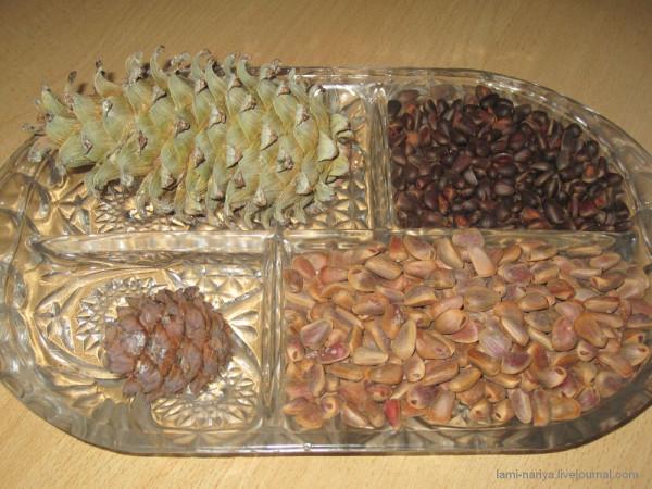 Кедровые орешки 2012 072