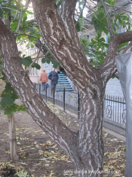 Укусное дерево окт. 2013г. 198