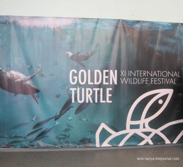 Фотовыставка - Золотая черепаха в нашем городе. IMG_3563