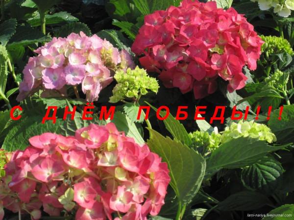С Днём ПОБЕДЫ 089
