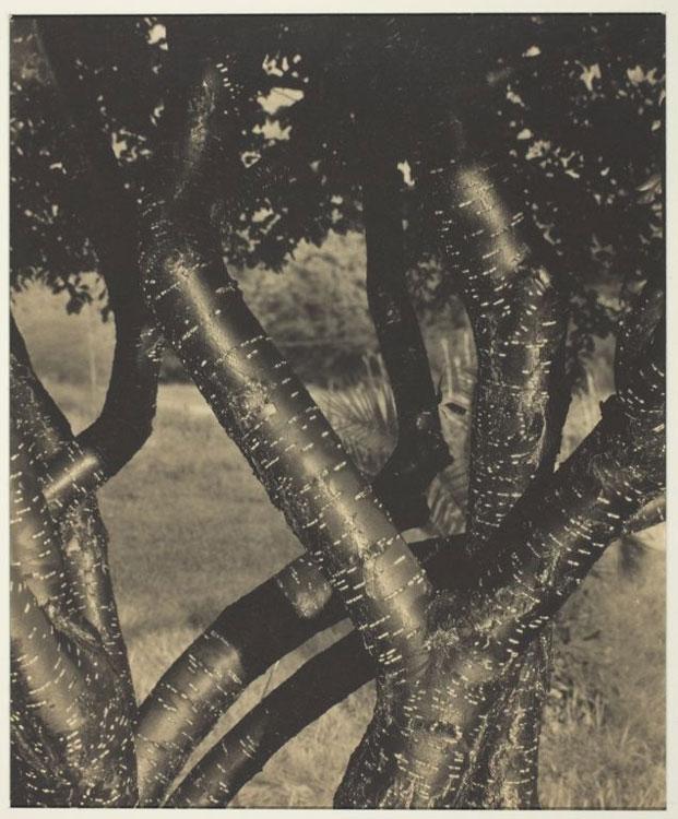 Alfred-Stieglitz1