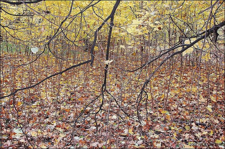 осень в Нескучном