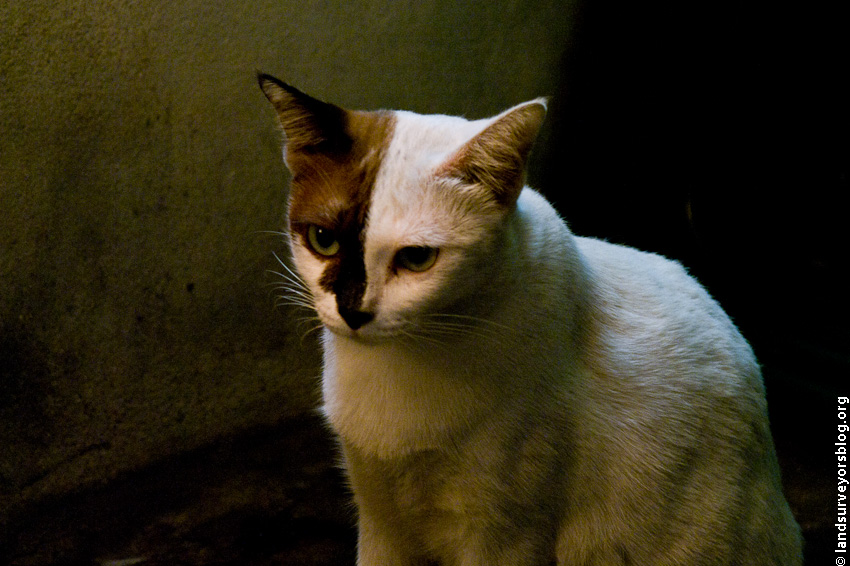 cat-BKK-7876