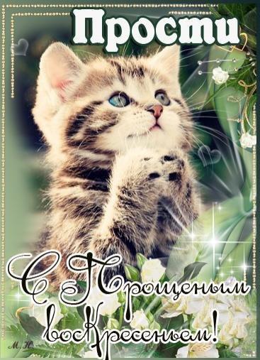 прости - котик