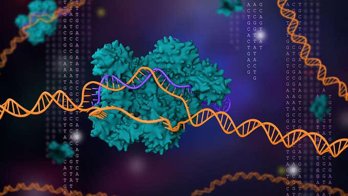 Gene-editing tool CRISPR wins the chemistry Nobe