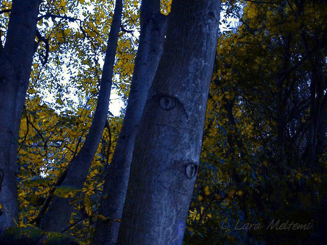 Eyes of trees txt.jpg