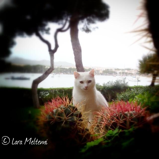 Street cat Снежинка from Mallorca