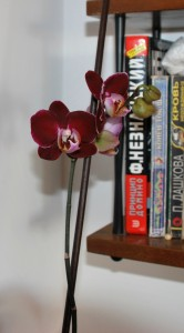 Ягодки-цветочки, 04.02.2013 004
