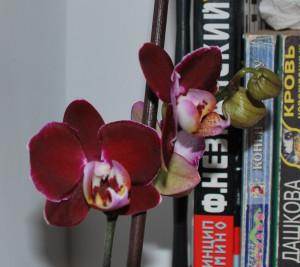 Ягодки-цветочки, 04.02.2013 006