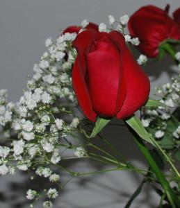 Розы 002