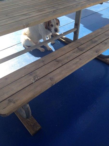 собака на палубе.2jpg