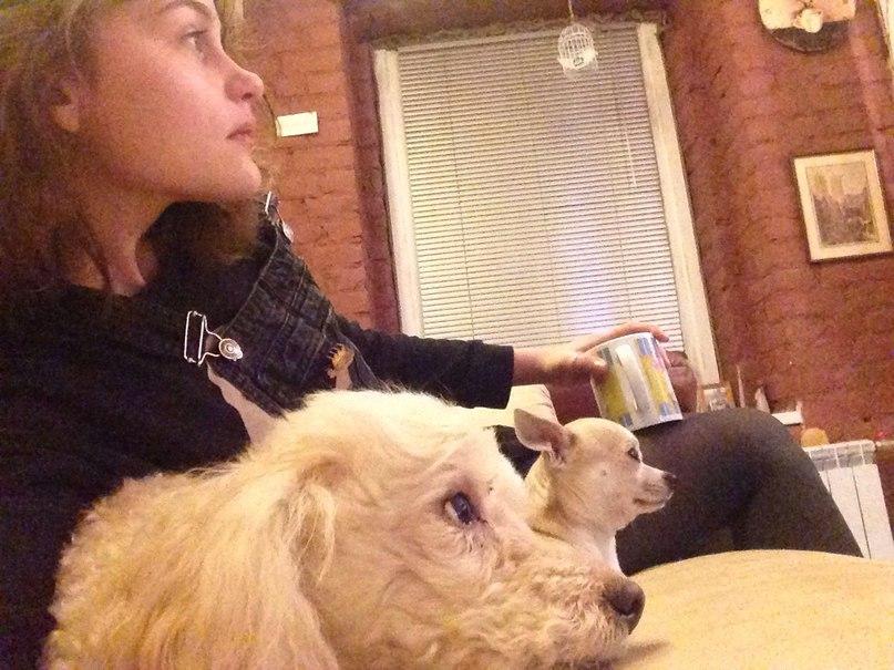 сидящая с собаками