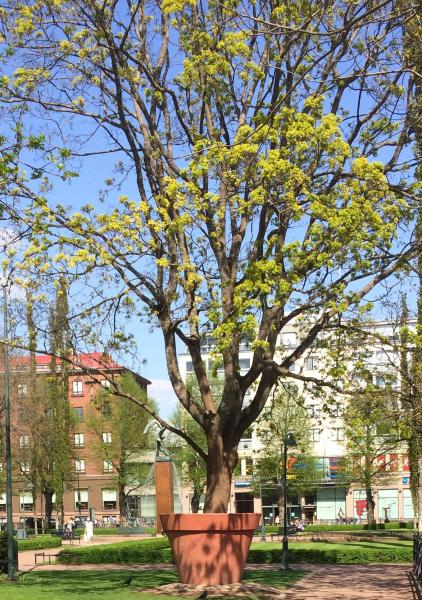 котка дерево