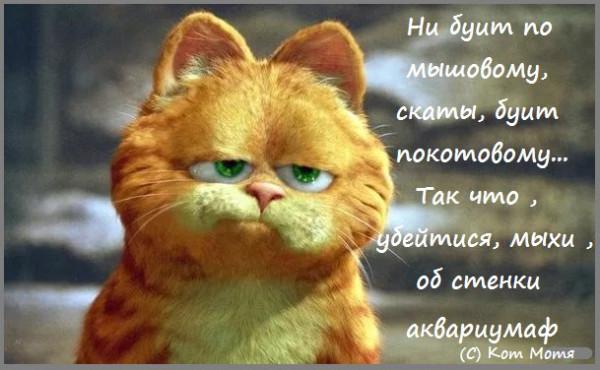 Блог Кота Моти  - Страница 2 1256243_600