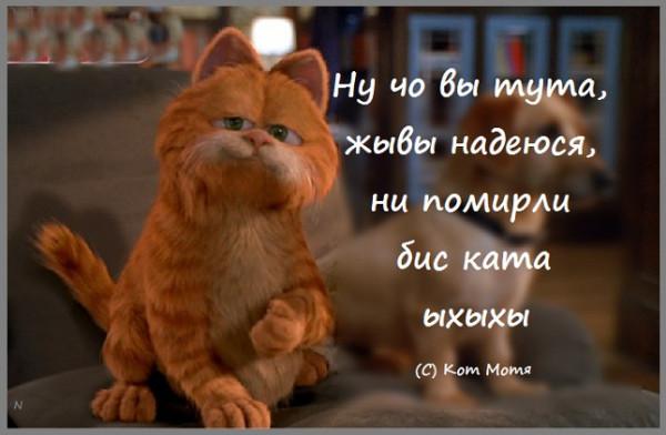 Блог Кота Моти  - Страница 2 1256554_600