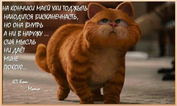 Блог Кота Моти  - Страница 2 1256803_600