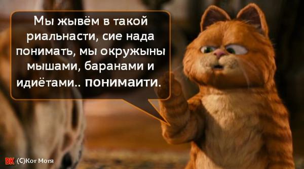Блог Кота Моти  - Страница 2 1257830_600
