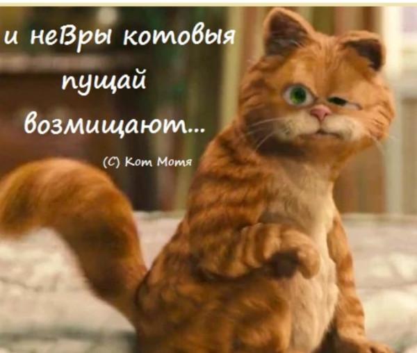 Блог Кота Моти  - Страница 2 1263147_600