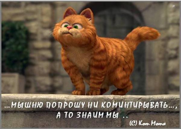 Блог Кота Моти  - Страница 2 1263508_600