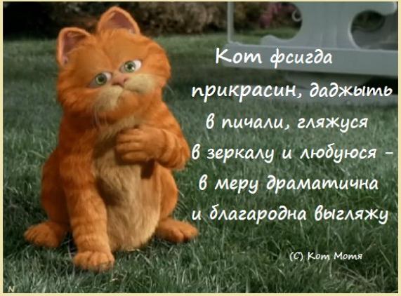 Блог Кота Моти  - Страница 2 1264212_600