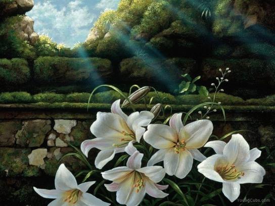 sun_lilies