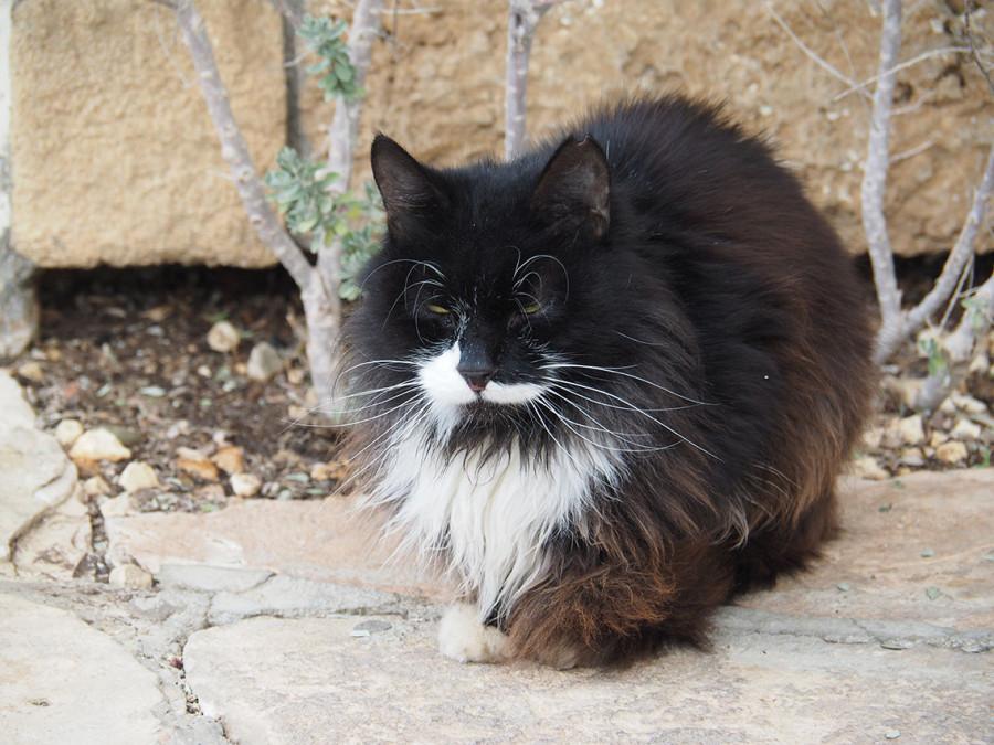 Уродливая любовь к котикам - ужасные последствия