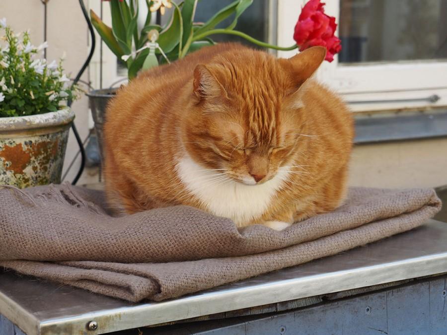 Кот постоянно мурчит почему