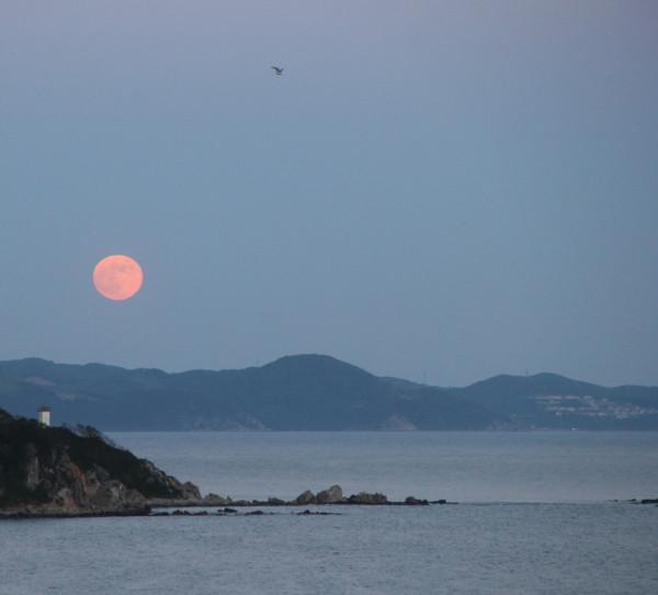 Клубничное(розовое)полнолуние над Японским морем-в Прим.крае(17 июня 2019 г.)-Луна, море, чайка и маяк.JPG