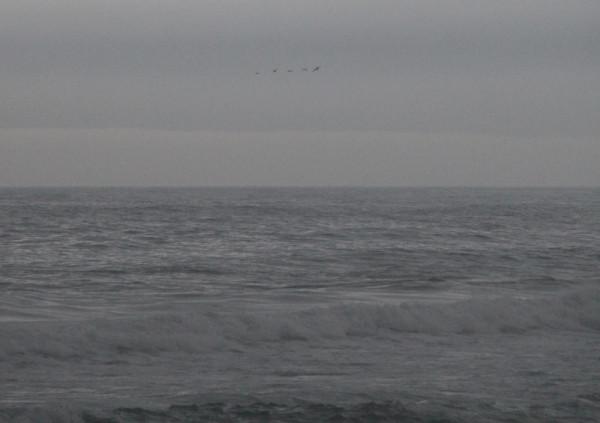22.07.2019(вечером),над Японским морем,вблизи п.Южно-Морской-во время уходящего тайфуна Данас-летела стая птиц,преодолевая стихию.