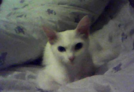 Тахта занята - Лариске придется ее уступить для кошки... в честь праздника!