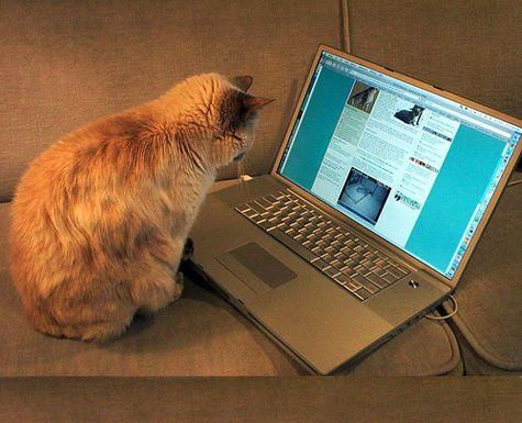 рыжик-блоггер
