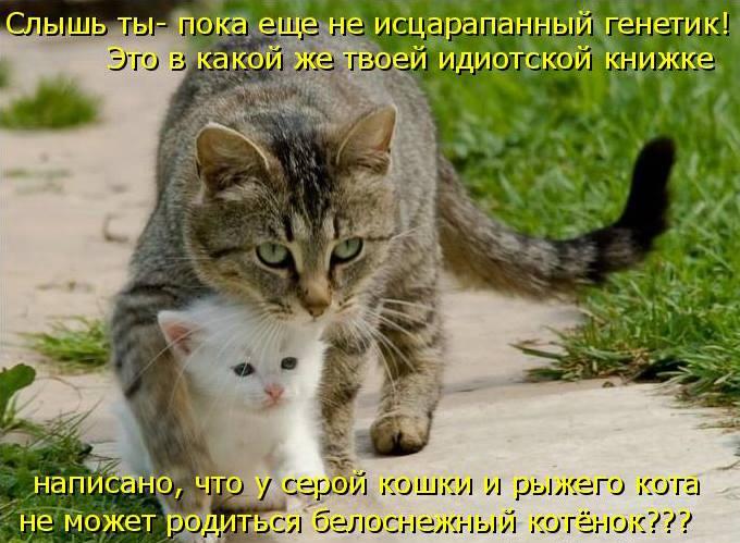 про белого котенка