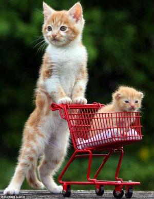 рыжие котят