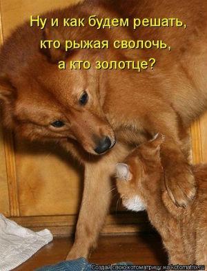 рыжие собака и котенок