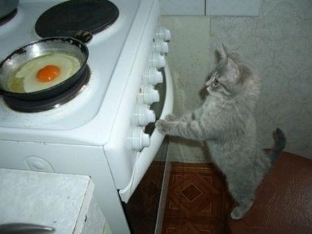 кошка у плиты