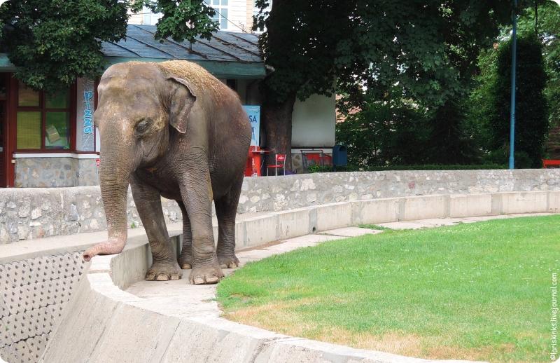 Зоопарк в Белграде 01 Слон